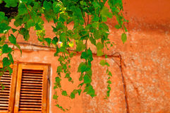 Grape and Window Stock Photo