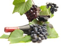 Grape wine Royalty Free Stock Photography