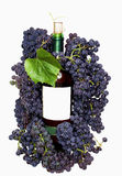Grape and wine. Dark grape and bottle wine isolated on white background Royalty Free Stock Photography