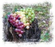 Grape wine. Stock Photos