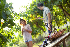 Grape and wine composition in vineyard Stock Photo