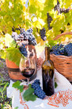 Grape and Wine composition in Vineyard Royalty Free Stock Images