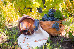 Grape and Wine composition in Vineyard Royalty Free Stock Image