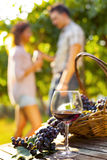 Grape and wine composition in vineyard Stock Images