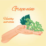Grape wine  in the palm of healthy nutrition vector Royalty Free Stock Images
