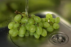 Grape wine in the sink Stock Image