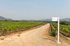Grape wine vine yard green field in south of Thailand Stock Photography