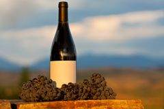 Grape and Wine at Vineyard. Red Grape and Wine at Vineyard Royalty Free Stock Images