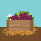 Grape in a wooden crate. Vector illustration Royalty Free Stock Photography