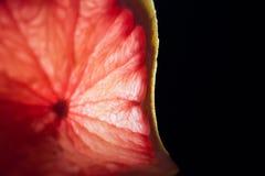 Grapefruint 免版税库存照片