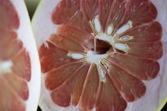 Grapefruit. Fresh cut in half Stock Images