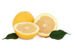 grapefruit Obrazy Royalty Free
