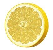 Grapefruit royalty-vrije illustratie