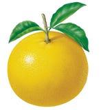 Grapefruit stock illustratie