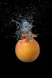 Grapefruit. Water splash grapefruit  on black background Royalty Free Stock Image