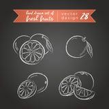 grapefruit Ajuste dos frutos frescos, inteiro, meio e mordido com folha Ilustração do vetor Isolado no quadro-negro ilustração do vetor