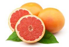 Grapefruit closeup Stock Images