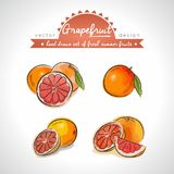 grapefruit A coleção tirada mão do esboço do vetor detalhou frutos frescos Isolado ilustração royalty free