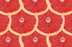 Grapefruit composition Stock Images