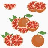grapefruit E Vetor ilustração do vetor