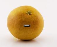 Grapefruit en evolutie Royalty-vrije Stock Foto's
