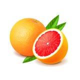 Grapefruit en plak op witte vector wordt geïsoleerd die vector illustratie