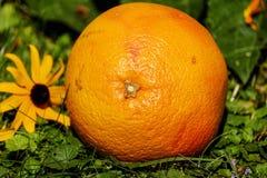 Grapefruit, Fruit, Vitamins Stock Images