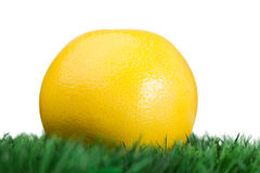 Grapefruit on grass Stock Photography