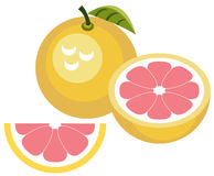 Grapefruit with half and slice. Illustration of simplistic pink grapefruit with half and slice Stock Photo