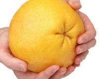Grapefruit in the hands Stock Photo