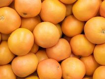 Grapefruit harvest. many grapefruit. grapefruits for food textures and backgrounds. Landscape. A backdrop of grapefruits royalty free stock photo