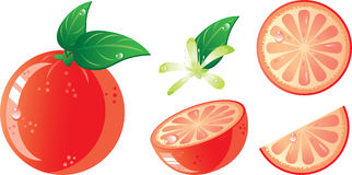 Grapefruit icon set. Isolated in a white background. Without transparency Stock Photo