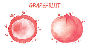 grapefruit Ilustração da aguarela ilustração royalty free