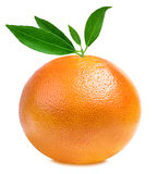 Grapefruit isolated on white Royalty Free Stock Photography