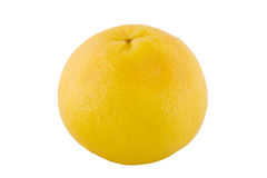 grapefruit jeden Fotografia Stock