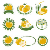 Grapefruit labels and elements set. Vector Stock Photo