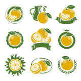 Grapefruit labels and elements set. Vector Royalty Free Stock Photo
