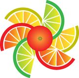 Grapefruit, lemon, lime and orange slices Stock Images