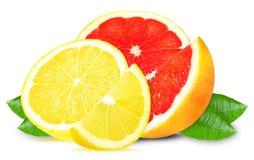 Grapefruit and lemon Stock Photography