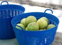 Grapefruit in mand Royalty-vrije Stock Foto's