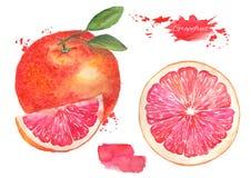 Grapefruit met blad royalty-vrije illustratie