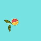 Grapefruit and orange citrus fruit halves on blue Stock Photography