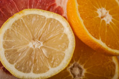 Grapefruit orange lemon Stock Images
