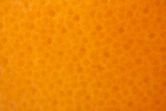 Grapefruit or orange texture Stock Photos