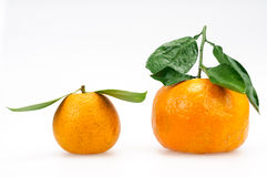 Grapefruit and oranges Royalty Free Stock Images