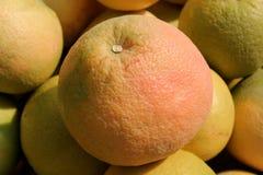 Grapefruit. A pile yellow nice grapefruits Royalty Free Stock Photos