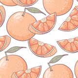 Grapefruit seamless pattern Royalty Free Stock Image