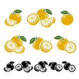 Grapefruit set. Vector Royalty Free Stock Photo