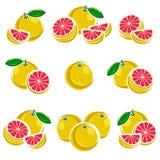 Grapefruit set. Vector Stock Photos
