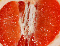 Grapefruit slice close-up Stock Image